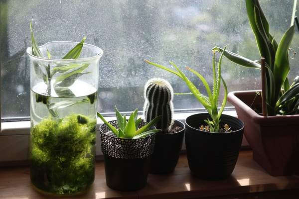Death of plants leads to lessons learned   Living   The Journal Gazette