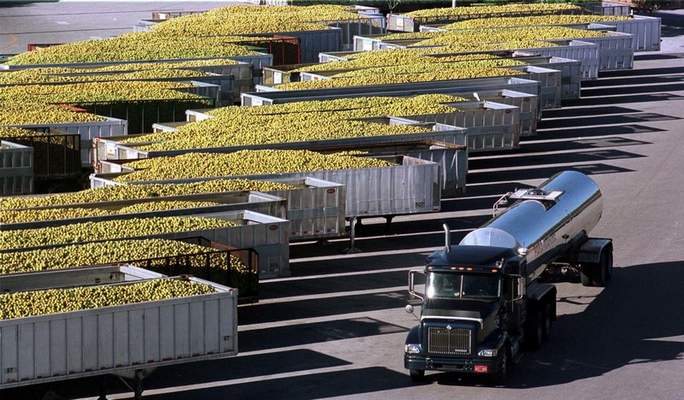 Bloomberg News photo by Richard Sheinwald A tanker truck with a load of orange juice drives past trailers of freshly harvested oranges waiting to be processed at the Tropicana Products juice plant in Bradenton, Florida, in 2002.
