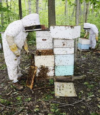 Tony Rekeweg and his father, Duane, check their hives on Adams Center Road.