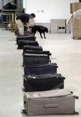 Associated Press photos TSA dog trainer Hans Phifer works with Rufus, a bomb-sniffing dog, in a makeshift luggage area during a drill at Lackland Air Force Base in Texas.