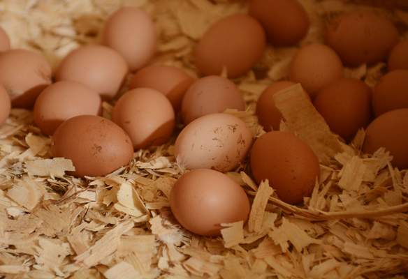 More than two dozen eggs lie in an egg box inside the hen house at Hoffman Certified Organics in Huntertown. The farm opened in April 2015 with the delivery of 400 baby chicks.