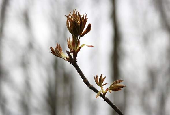 Photo by Erin Belcher