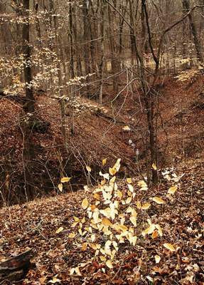 Cathie Rowand | The Journal Gazette Ravine leads into Cedar Creek at the Tom and Jane Dustin Nature Preserve.