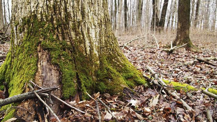 Cathie Rowand | The Journal Gazette ACRES Land Trust's Fogwell Forest preserve at9999 Whippoorwill Drive in Fort Wayne.