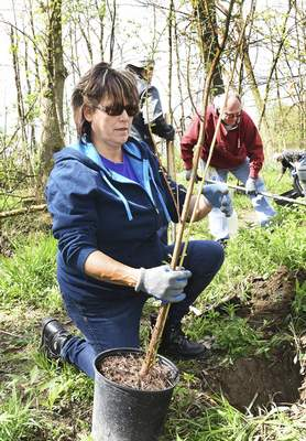 Cathie Rowand | The Journal Gazette Robin Adkins and fellow Fed Ex employees plant trees along Trier Ditch Friday at Heatherwood Park in New Haven. The Earth Day project continues today and Sunday.