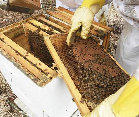 Besides some mold, LaSalle was pleased with how his beehives held up over winter.