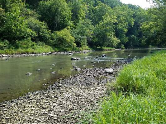Courtesy A conservation group has been formed to oppose the state's logging plan for Salamonie River State Forest. It will meet Oct. 17 in Huntington.