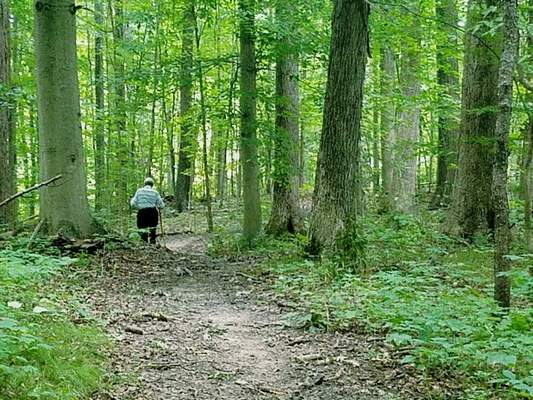 Courtesy Residents are concerned that a state management plan to control and cut down trees at SalamonieRiver State Forest could cause more harm than good.