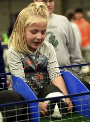 Saturday Gallery: 2019 Easter Rabbit Show | Local | The