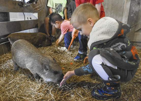 Michelle Davies | The Journal Gazette Luke Field, 5, pets lets one of the kune kune piglets sniff his hand Thursday morning during Animal Playdates at Salomon Farm.