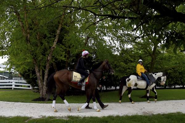 Preakness contender War of Will, with exercise rider Kim Carroll aboard, is led out of the barn to exercise, Tuesday, May 14, 2019, at Pimlico Race Course in Baltimore. The Preakness Stakes horse race is scheduled to take place Saturday, May 18. (AP Photo/Will Newton)