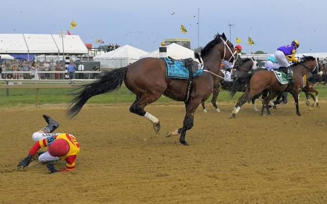 Associated Press Jockey John Velazquez tumbles to the track after falling off Bodexpress at start of the Preakness Stakes on Saturday. Velazquez was unhurt, and Bodexpress ran riderless, though officially did not finish.
