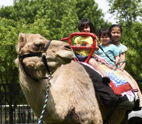 Katie Fyfe | The Journal Gazette  Sisters Sophia, Chloe and Zoey Boiko enjoy a camel ride together during Arab Festival at Headwaters Park on Saturday.