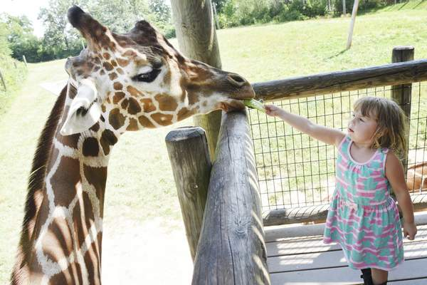 The Fort Wayne Children's Zoo has been named one of the top zoos in the country.