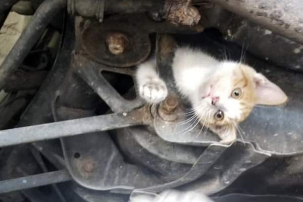 In this Wednesday, July 10, 2019, image provided by D. Scott Bourne, a kitten is trapped in the undercarriage of car at an auto repair shop in Frankfort, Ky. (D. Scott Bourne via AP)