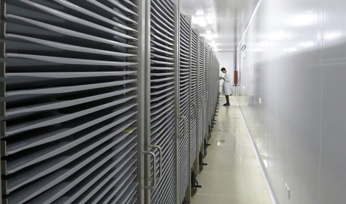 This July 13, 2019 photo provided by Guangzhou Wolbaki Biotech shows containers where Aedes albopictus mosquito larvae are being raised at the company's lab in Guangzhou, China. (Guangzhou Wolbaki Biotech via AP)