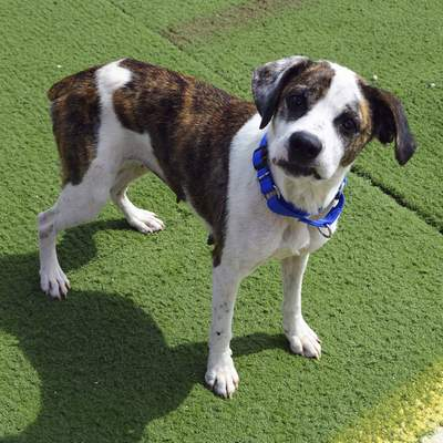Allen County SPCA Thessaly is a 1-year-old spayed mixed breed. She is sweet, silly and snuggly.  Meet her at the Allen County SPCA, 4914 S. Hanna St.