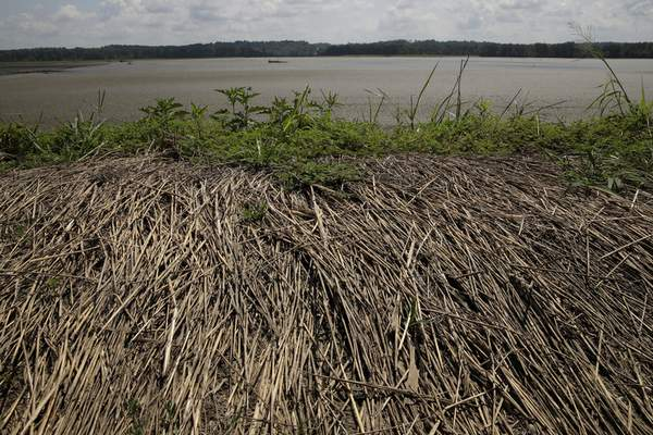 In this Tuesday, Aug. 6, 2019 photo, dead grass remains knocked over after flood waters flowed over a broken levee along the Missouri River near Saline City, Mo. (AP Photo/Charlie Riedel)