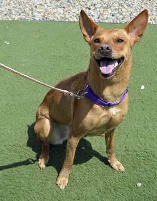 Allen County SPCA Doralie is a spayed 3-year-old mixed breed who would make a great family dog. For more information on her, contact Allen County SPCA, 4914 S. Hannah St., at 744-0454 or go to www.acspca.org.