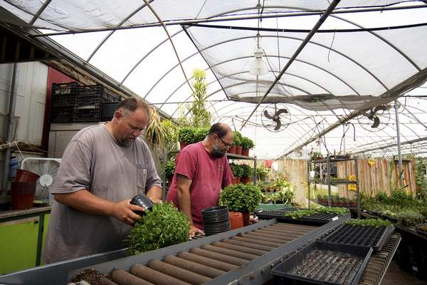 Katie Fyfe | The Journal Gazette  Brothers Brian (left) and Blake (right) Young work on potting plants at Young's Greenhouse on Wednesday, August 7th, 2019.