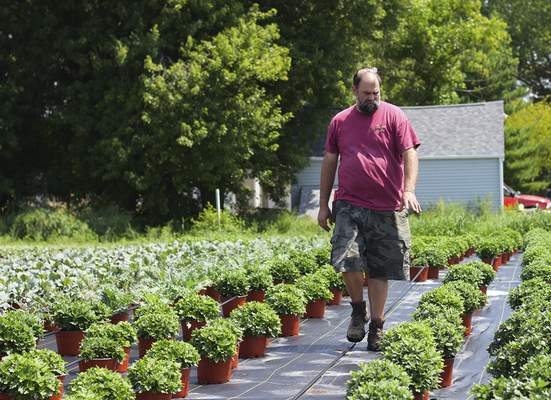 Katie Fyfe | The Journal Gazette Blake Young looks through chrysanthemums for a customer at Young's Greenhouse.