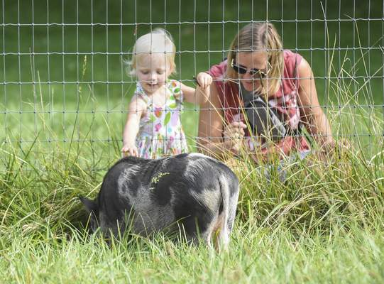 Michelle Davies | The Journal Gazette  Jessie Weidner of Fort Wayne and her daughter Gracie, 2, stop to visit the pigs while exploring Salomon Farm Park Tuesday morning.