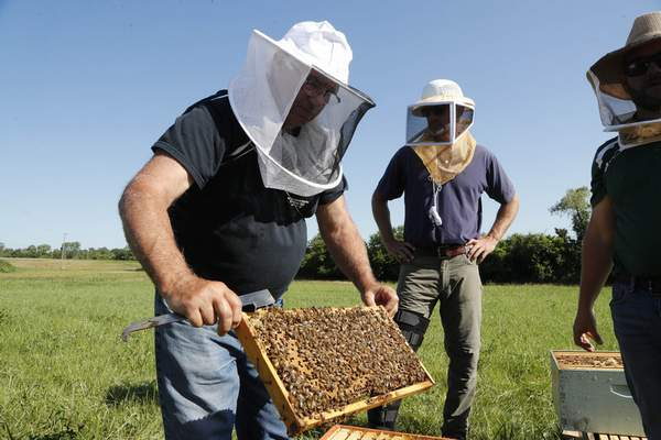 In this July 11, 2019 photo, Frank Bartel, a 69-year-old resident of Gregory, Mich., looks at a hive of bees in Superior Township, Mich. (AP Photo/Carlos Osorio)