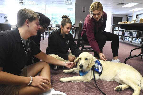 Michelle Davies | The Journal Gazette Jared, a comfort dog at Concordia Lutheran High School, gets some attention from  students, from left, senior Bo Bearman,  junior Priscah Norwood,  sophomore Madeline Vnuk and senior Micah Hockemeyer after a special installation service for the canine  Wednesday morning. Jared, trained by Lutheran Church Charities, has already interacted with students under the care of physical education teacher Pam Rusher and is also trained to help people at churches, schools, nursing homes, hospitals and in disaster-response situations. Jared will also work at Holy Cross Lutheran Church School and be an ambassador for both.