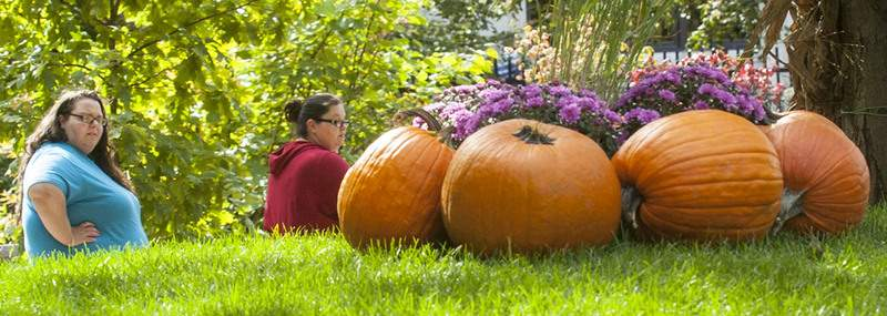 File The Foellinger-Freimann Botanical Conservatory's Punkin' Path begins Tuesday and runs through Oct. 27.