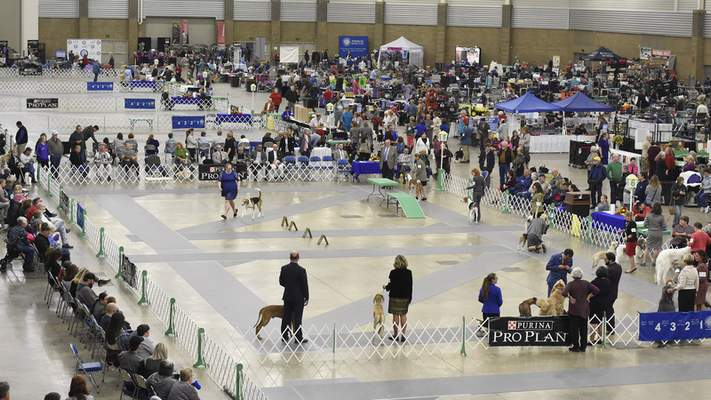 Photos by Rachel Von Stroup | The Journal Gazette  Memorial Coliseum was busy Saturday as it hosted the annual Old Fort Cluster Dog Show.