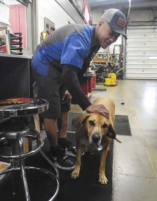 Michelle Davies | The Journal Gazette Charlie, the resident greeter for Rich's Auto Center, stops for a pat from Matt Ingle, ASR for Wildman, as he makes a delivery to the shop.