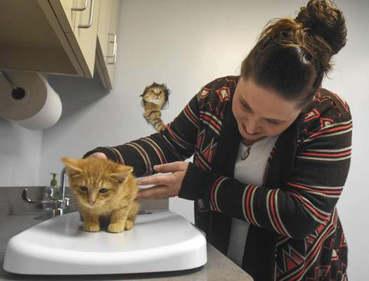 Cindy Brown, office administrator with Hope for Animals, weighs a kitten brought in by Josh Feichter. (Photos by Michelle Davies | The Journal Gazette)