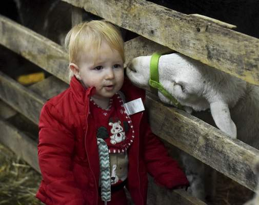 Katie Fyfe | The Journal Gazette Thomas Schwartz, 14 months, gets a peck on the cheek from a sheep Sunday during Christmas in the Park at the Franke Park. To see a photo gallery from the park, go to www.journalgazette.net/media.