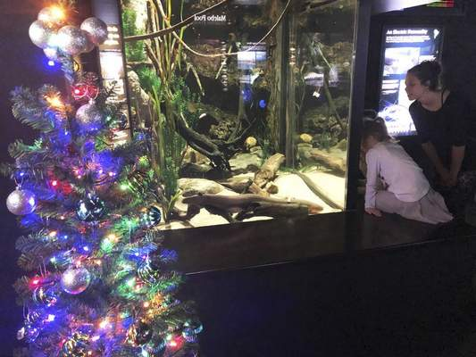 In this undated photo provided by the Tennessee Aquarium, an electric ell named Miguel Wattson lights up a Christmas tree at the Tennessee Aquarium in Chattanooga, Tenn.  (Thom Benson/Tennessee Aquarium via AP)
