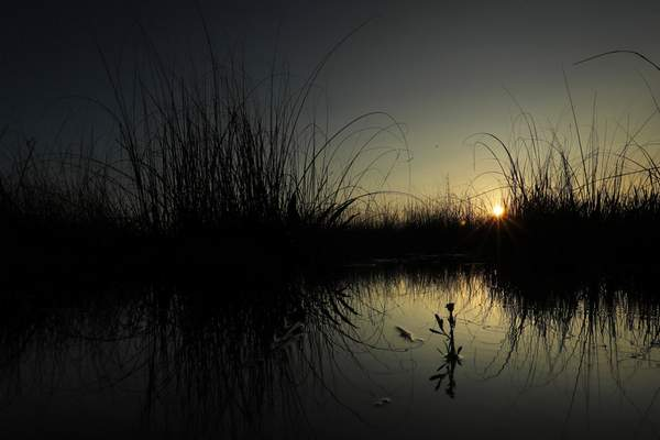 In this Monday, Oct. 21, 2019 photo, the sun rises behind saw grass in a marsh at Everglades National Park near Flamingo, Fla. (AP Photo/Robert F. Bukaty)