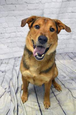 Allen County SPCA