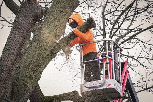Mike Moore | The Journal Gazette Anthony Ley with Monster Tree Service of Fort Wayne removes dead branches Monday from a tree that poses a safety risk along Kenwood Avenue.