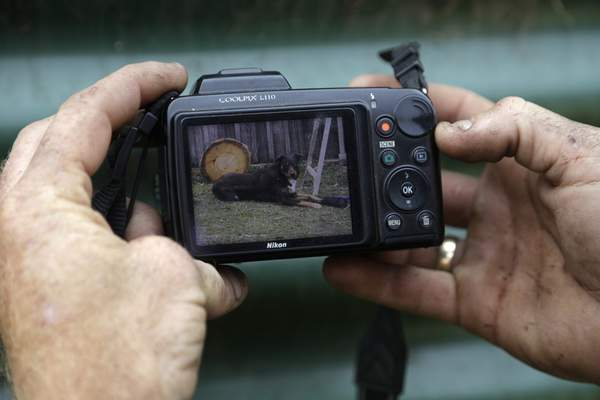 Volunteer firefighter Ash Graham holds a camera showing a photo of his missing dog, Kozi, at the fire station at Nerrigundah, Australia, Monday, Jan. 13, 2020, following a wildfire ripped through the town on New Year's Eve. (AP Photo/Rick Rycroft)