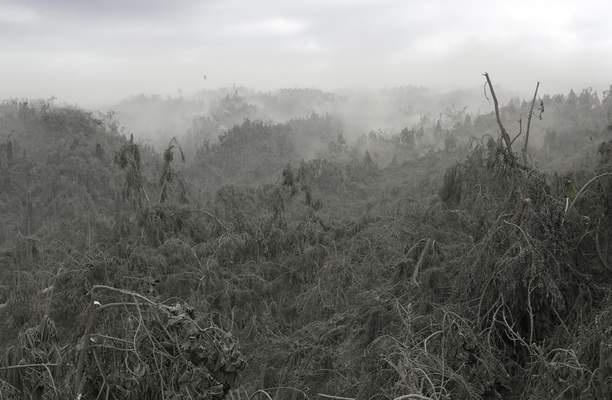 Clouds of volcanic ash rise up from damaged trees in Laurel, Batangas province, southern Philippines on Tuesday, Jan. 14, 2020. (AP Photo/Aaron Favila)