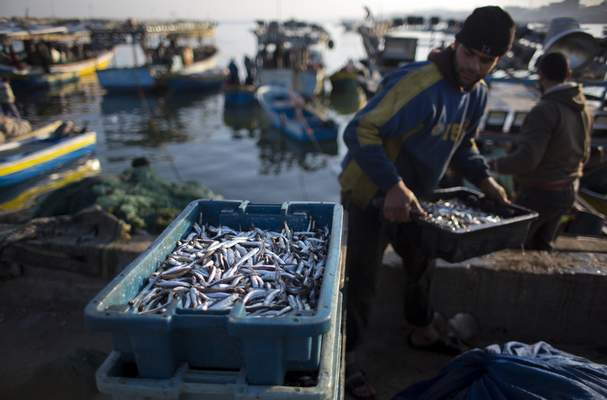 FILE - In this April 3, 2019, file photo, Palestinian fishermen unload their catch after a night fishing trip, in the Gaza Seaport. (AP Photo/Khalil Hamra, File)