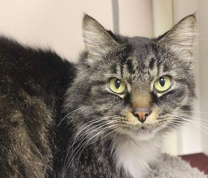Fort Wayne Animal Care & Control Gary is a 5-year-old male who's been neutered. He's been waiting a long time at the shelter for his forever home. To meet Gary and the other adoptable animals, call the Animal Care & Control shelter 427-5502.