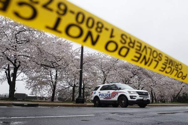 A Washington D.C. Metropolitan Police vehicle is parked on the other side of a tape police line along the Tidal Basin as cherry blossoms cover the trees, in Washington, Monday, March 23, 2020. (AP Photo/Carolyn Kaster)