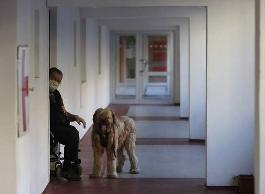A man on a wheelchair waits with his dog for his shopping done by a volunteer in Prague, Czech Republic, Tuesday, March 24, 2020. (AP Photo/Petr David Josek)