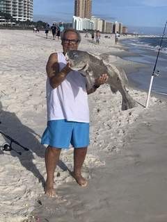 Courtesy Bob Osterholt, 68, of Angola caught this 30-pound, 3-foot black drum fish on Christmas in Orange Beach, Ala., while surf fishing.