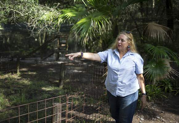 """Associated Press Carole Baskin, founder of Big Cat Rescue, walks the property near Tampa, Fla., in July 2017. The disappearance of Baskin's husband in 1997 is unsolved and is the subject of the series """"Tiger King."""""""