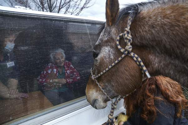 Mike Moore | The Journal Gazette A resident of Heritage Park American Senior Communities visits with Hero the horse on Friday through the window of the nursing home. Residents received window visits by horses, large and small, to provide comfort and variety to their days during visitation restrictions related to COVID-19 virus.American Senior Communities arranged for the visits by the ASC Cavalry, Horses of Hope.The horses are led around the outside of the community and up to the windows of the resident rooms.