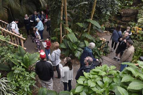 May 12, 2019:Families spend time together at Foellinger-Freimann Botanical Conservatory during the Mother's Day Downtown event. (Journal Gazette file photo) (Rachel Von | The Journal GazetteRachel Von | The Journal Gazette)