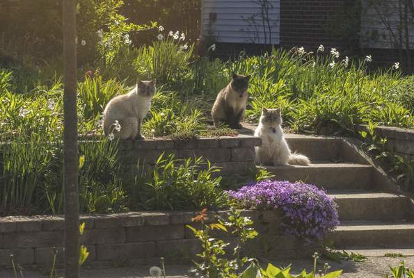 Michelle Davies | The Journal Gazette  A bevy of beauties enjoys the morning sunshine in the front yard of a home near Nevada and Alabama avenues Saturday.