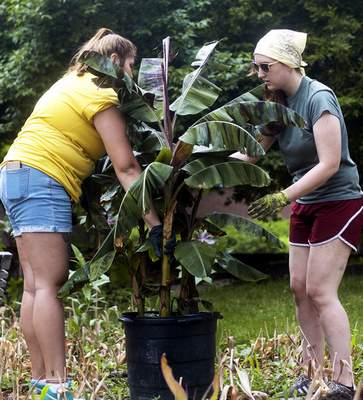 Katie Fyfe | The Journal Gazette Hannah Acosta, left, and Shelby Stouder with the Fort Wayne Parks and Recreation Department plant a tree in the gardens at Freimann Square on Wednesday.