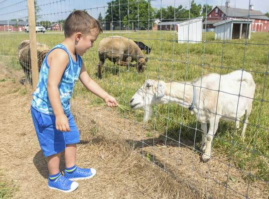 Michelle Davies | The Journal Gazette Wilson Shavlik, 4, of California, feeds some grass to a goat at Salomon Farm Monday morning while exploring with grandparents Mike and Sandy Shavlik, of Fort Wayne.